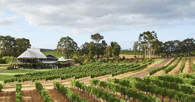 Trang trại trồng nho tại Margaret, Tây Úc